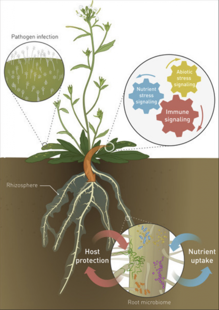 plant microbiome image