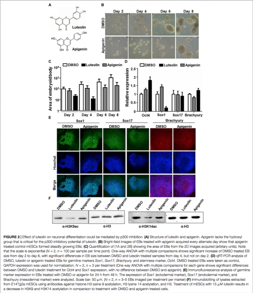 images of Luteolin Negatively Affecting Neuronal Differentiation